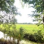 Einfamilienhaus-im-historisch-gewachsenen-Dorf-Alse-Weidenblick